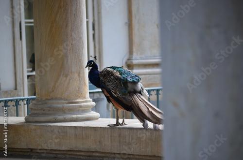 Aluminium Pauw peacock in palace in Warsaw