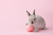 Easter bunny rabbit with pink painted egg on pink background. Easter holiday concept.