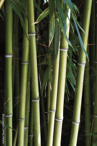 Fotobehang Bamboe bamboo