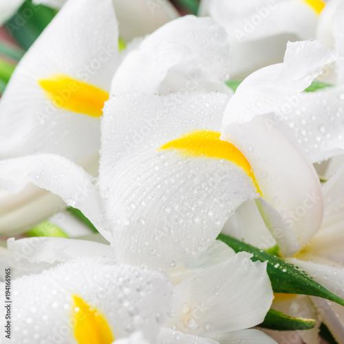 Fotobehang Iris Close up of Beautiful White Iris Flowers