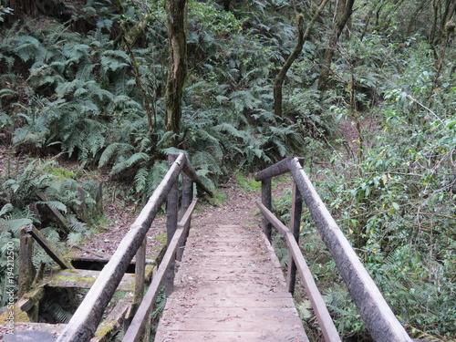 In de dag Weg in bos Puente
