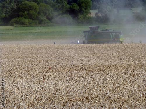 Foto op Aluminium Zuivelproducten Getreideernte