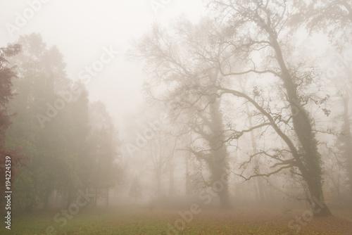 Piękna sceneria w lesie z mgłą, mgłą i jesieni ulistnieniem