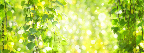 Foto op Plexiglas Lime groen Green birch leaves branches, green, bokeh background. Nature spring background.