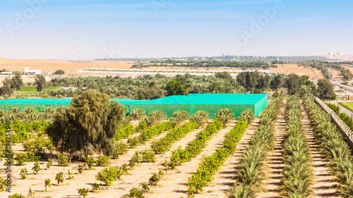 Fotobehang Abu Dhabi Desert Farm Near Al Ain