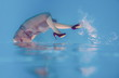 Amazing beautiful art surreal portrait of woman's legs in violet shoes underwater in the swimming pool