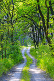 rut road in green forest - 194298371