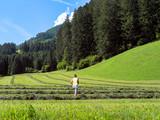 Heu in den Alpen in Reihen zusammenrechen  - 194299170