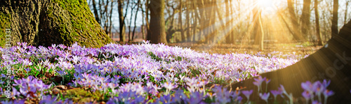 Fototapeta Wiese mit zarten Blumen im Frühling