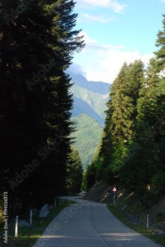Staande foto Weg in bos Droga do Uszguli w Gruzji