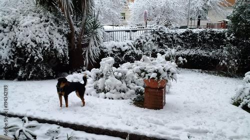 cane in un giardino innevato