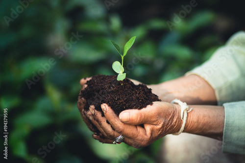 Plant a tree The soil and seedlings in the grandmother's hand - 194379595