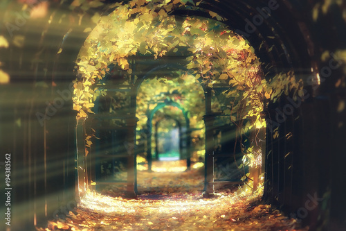 Fotobehang Herfst autumn landscape / sunrays in autumn trees. Sunset in the forest with yellow leaves. Indian summer for a walk in the autumn park. Glare and sun rays concept of landscape in nature