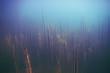 Alga underwater landscape world freshwater pond