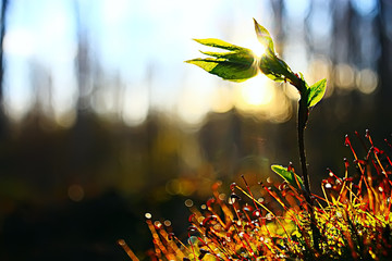 moss macro spring / natural spring background with rays of sun moss nature