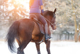 Bay horse with female rider trotting on winter field. Equestrian concept image with copy space - 194398599
