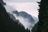 Foggy Mountain Forest Valley in Norway