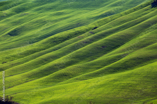 Keuken foto achterwand Pistache Typical Tuscan landscape - green waves