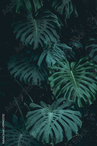 Plant background - 194413702