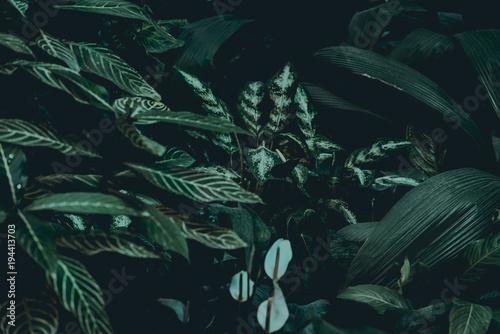 Plant background - 194413703