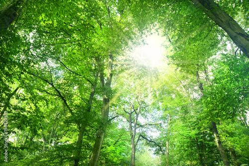 Deurstickers Groene Landschaft 536
