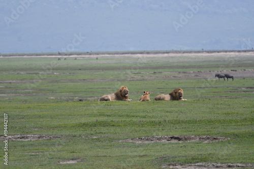Fotobehang Khaki Safari