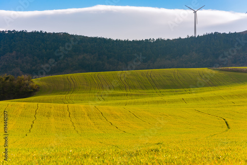 Aluminium Honing Vista del campo de trigo