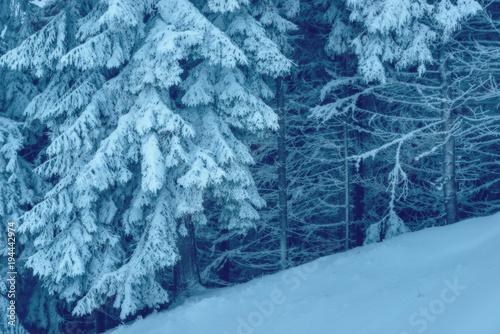 Fotobehang Blauw The winter forest