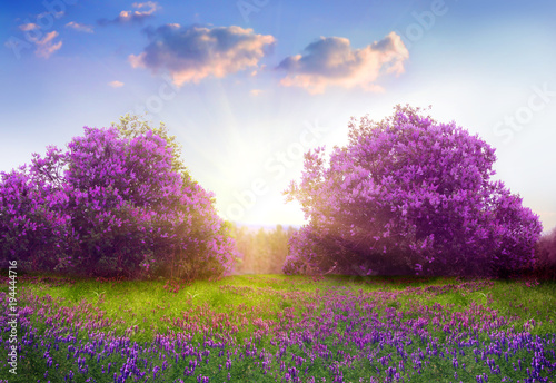Aluminium Lente Beautiful landscape with spring flowers.Lilac trees in blossom