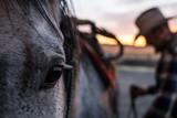 Cowboy saddling horse - 194451774