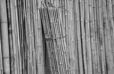 Bamboo  being used for building materials, as a food source, and as a versatile raw product. Bamboo has a higher specific compressive strength than wood, brick, or concrete a specific tensile streel. © Thipphawan