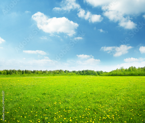 field of spring flowers and perfect sky - 194453337