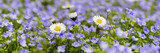 panoramic meadow with many flowers at spring - 194459579