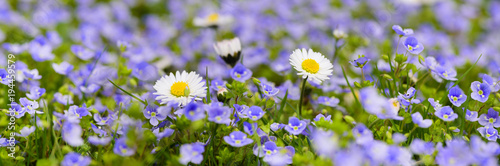 Aluminium Lente panoramic meadow with many flowers at spring