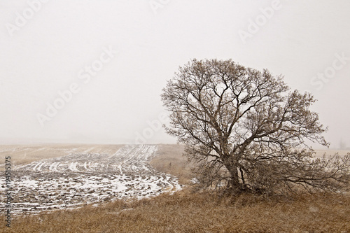 Deurstickers Wit Prairie Landscape in Winter
