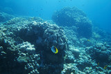 coral colony on a reef - 194515547