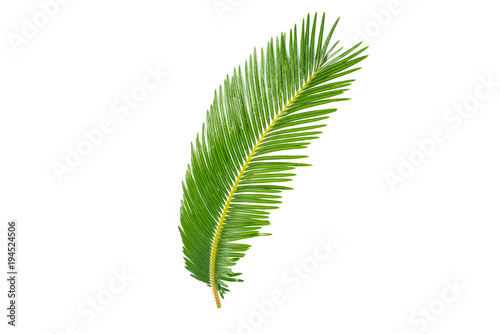 Fresh GREEN palm leaves isolated on white background