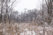 Winter has come. Snowy field and the silence in the forest