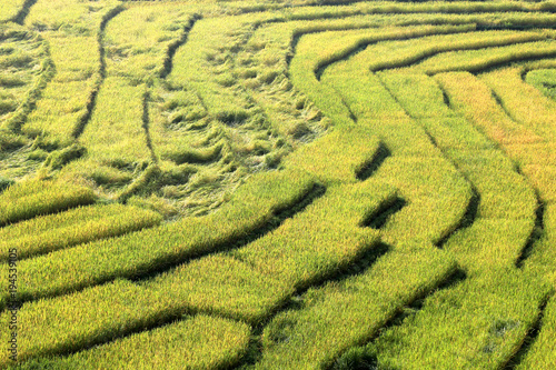 Deurstickers Rijstvelden Rice field on the mountain in Thailand