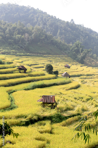 Fotobehang Oranje Rice field on the mountain in Thailand