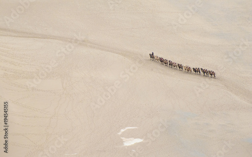 Aluminium Kameel A group of camels walking in the desert