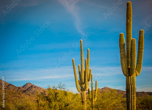 Staande foto Arizona cactus in a desert in southwest United States