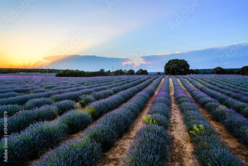 Fotobehang Lavendel Lavender fields. Summer sunset landscape in Brihuega