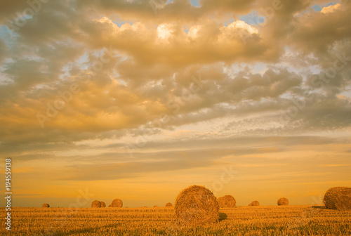 Fotobehang Honing Beautiful countryside landscape. Round straw bales in harvested fields and blue sky with clouds