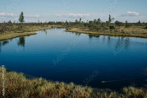 Fotobehang Nachtblauw Large blue lake with birches and pine trees in swamp in summer. Kemeru Latvia
