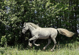 Art portrait of beautiful white sportive horse at green summer woods background - 194567917