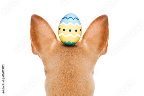Staande foto Crazy dog happy easter dog with egg