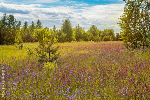 Fotobehang Honing Field at the edge of the village, grass, summer day