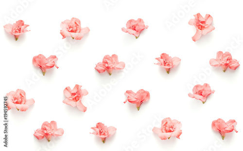 Aluminium Azalea Seamless Pattern With Soft Pink Azalea Flowers On White Background