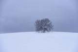 Lonely tree in snowy field (Strandzha mountain, Bulgaria) - 194604135